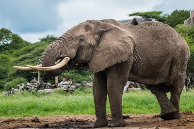 Elephant Trails, Ol Donyo